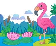 Flamingo topic image 5 Stock Images