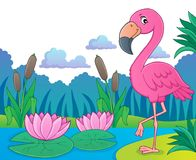 Flamingo topic image 5 Stock Images