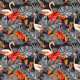 Flamingo, tropical leaves, exotic flowers. Seamless pattern, black background. Watercolor Stock Photos