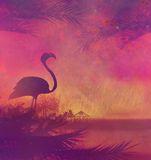 Flamingo on Tropical Stock Photos