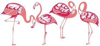 flamingo Tropiska fågelflamingo vektor illustrationer