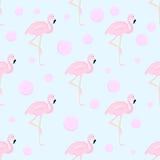 Flamingo und Blasen Stockfotografie