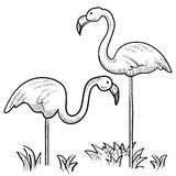 Flamingo vector. Doodle style sketch of two flamingo birds standing in the grass in vector illustration Royalty Free Stock Photography