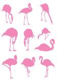 Flamingo Stock Images