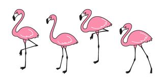 Flamingo vector set Cute flamingos collection Flamingo animal exotic nature wild fauna illustration. Cartoon royalty free illustration