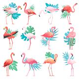 Flamingo vector tropical pink flamingos and exotic bird with palm leaves illustration set of fashion birdie isolated on. White background Royalty Free Stock Images