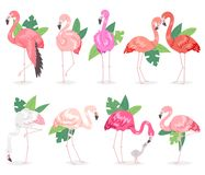 Flamingo vector tropical pink flamingos and exotic bird with palm leaves illustration set of fashion birdie in tropics. Isolated on white background Stock Photography