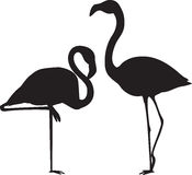 Flamingo Vectors. Elegant flamingo vector for any project Royalty Free Stock Photography