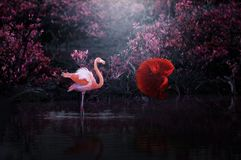 Flamingo vs red fish dance royalty free stock photography