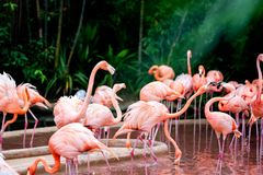 Flamingo watching on as others bicker stock images