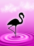 Flamingo in the water. Flamingo bird in the water ripple Royalty Free Stock Photo