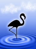 Flamingo in the water. Flamingo bird in the water ripple Stock Photos