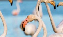 Flamingo, Water Bird, Beak, Bird royalty free stock photos