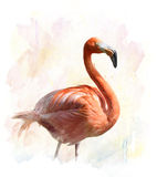 Flamingo - Watercolor Illustration Stock Image