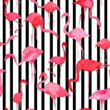 Flamingo watercolor silhouette pattern, black and white striped Stock Photography