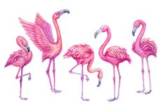 Flamingo watercolor tropical set. Exotic paradise birds illustration. Flamingo watercolor tropical set. Exotic paradise birds hand drawn illustration stock illustration