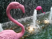 Flamingo in waterfall Stock Photos