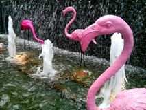 Flamingo in waterfall Royalty Free Stock Photography