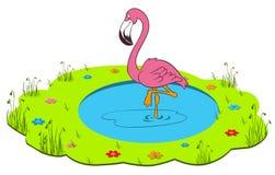 Flamingo in the wildlife. Illustration of flamingo in the wildlife Stock Photos