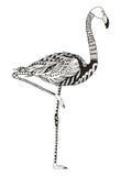 Flamingo zentangle stylized, vector, illustration, freehand penc Royalty Free Stock Images