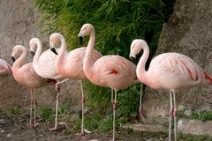 Flamingo at the zoo stock photography
