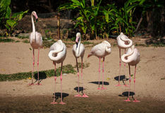Flamingo in the Zoo Stock Images