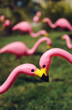 Flamingoed Royalty Free Stock Photography