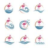Flamingoemblemuppsättning Arkivbilder
