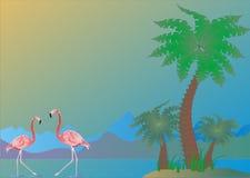 flamingoen gömma i handflatan Royaltyfria Bilder