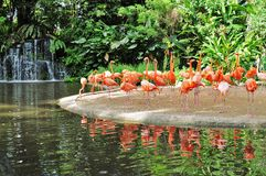 flamingoes Royaltyfria Foton