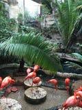 Flamingoes Στοκ φωτογραφία με δικαίωμα ελεύθερης χρήσης