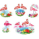 Flamingoes and Arrangement from tropical Stock Photography