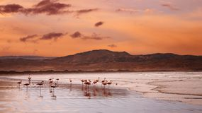 Flamingoes on the beach Royalty Free Stock Image