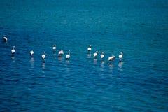 Flamingoes en mooi landschap en bezinning in zout meer in Turkije royalty-vrije stock foto's