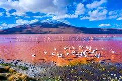 Flamingoes in Laguna Colorada, Bolivië Stock Foto