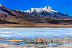 Flamingoes in Laguna Verde ,Bolivia. The most beautiful Landscape Royalty Free Stock Images