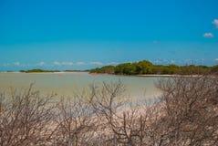 Flamingoes at Rio Lagartos Biosphere Reserve, Yucatan, Mexico Stock Photo