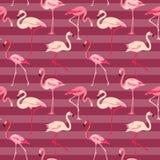 Flamingofågelbakgrund Arkivfoton