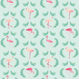 Flamingofågelbakgrund Royaltyfria Bilder