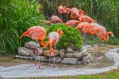 Flamingofamilie in de dierentuin van Lissabon, Portugal Stock Fotografie