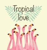 Flamingoillustratie voor Tropische liefde Royalty-vrije Stock Afbeeldingen