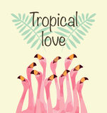 Flamingoillustration für tropische Liebe Lizenzfreie Stockbilder
