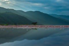 Flamingokönigreich Lizenzfreie Stockfotos