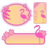 Flamingokennsätze Stockfotografie