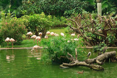 flamingokowloonpark Royaltyfria Bilder