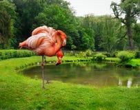 Flamingoliefde Stock Foto's