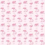 Flamingomuster Lizenzfreies Stockfoto