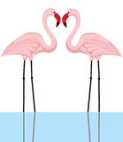Flamingopaare stockbild