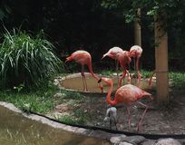 flamingopartij Stock Foto's