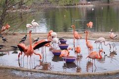 Flamingorosa, -WEISS und -orange Stockbild